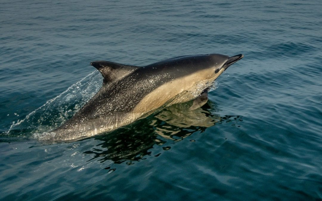 Where can I see dolphins in Scotland?